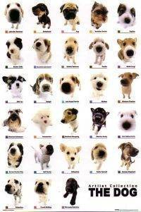 POSTER DOG COLLECTION  61 X 91.5 CM
